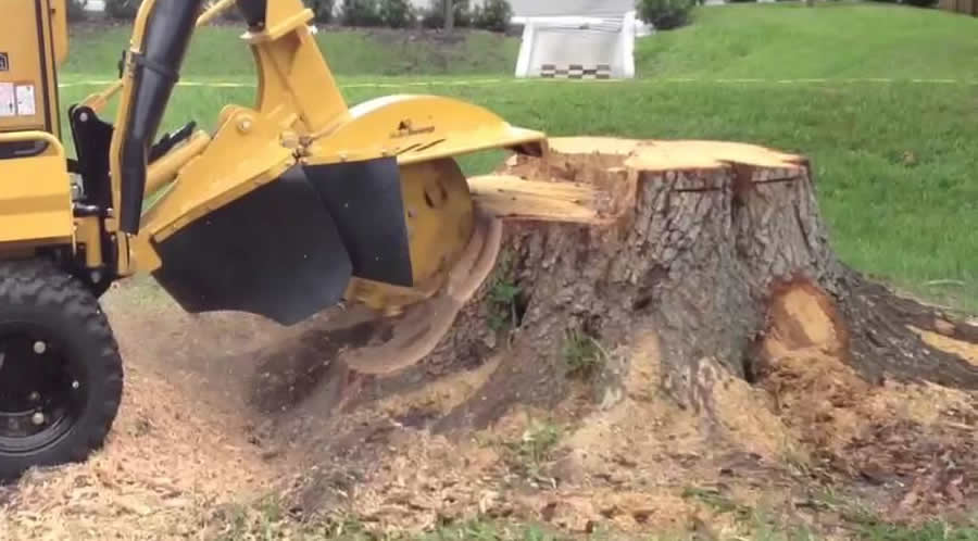 Menifee Stump Grinding Service and Murrieta Stump Removal Service