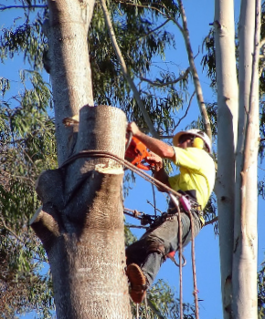 Tree Removal Service in Lake Elsinore