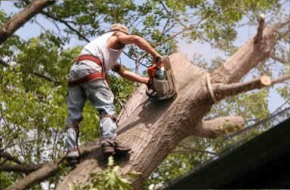 Temecula Tree Trimming Service
